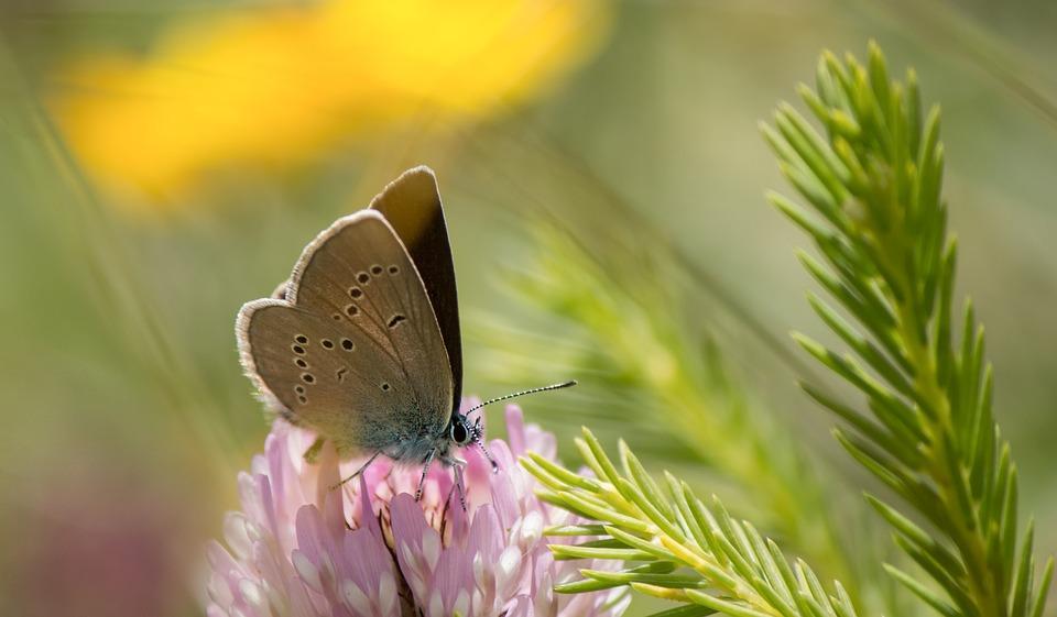 Retos ambientales: Biodiversidad