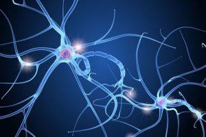 """Gens i neurones: humans 2.0"", amb Gemma Marfany i Mara Dierssen (10 d'abril)"