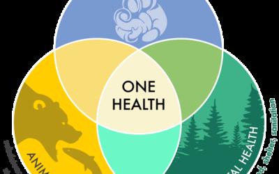"""Mesa redonda online """"One health: un planeta, una sola salud"""""""